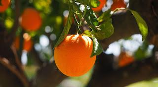 فوائد البرتقال الصحية لعلاج الأمراض ..تعرف عليها!