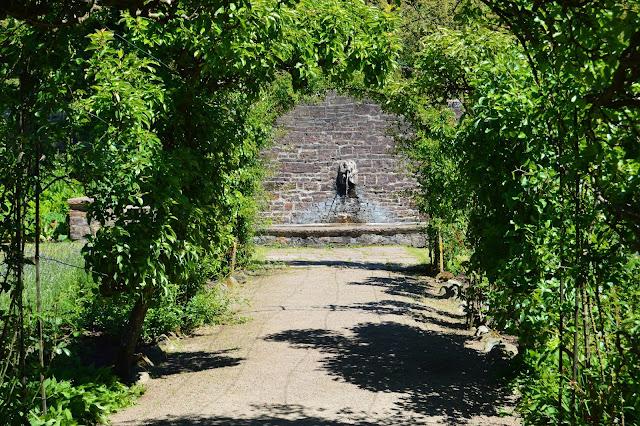 Bueganger av espaljerte frukttrær.