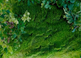 Cuaderno de campo y taller jardines verticales tipos y for Caracteristicas de los jardines verticales
