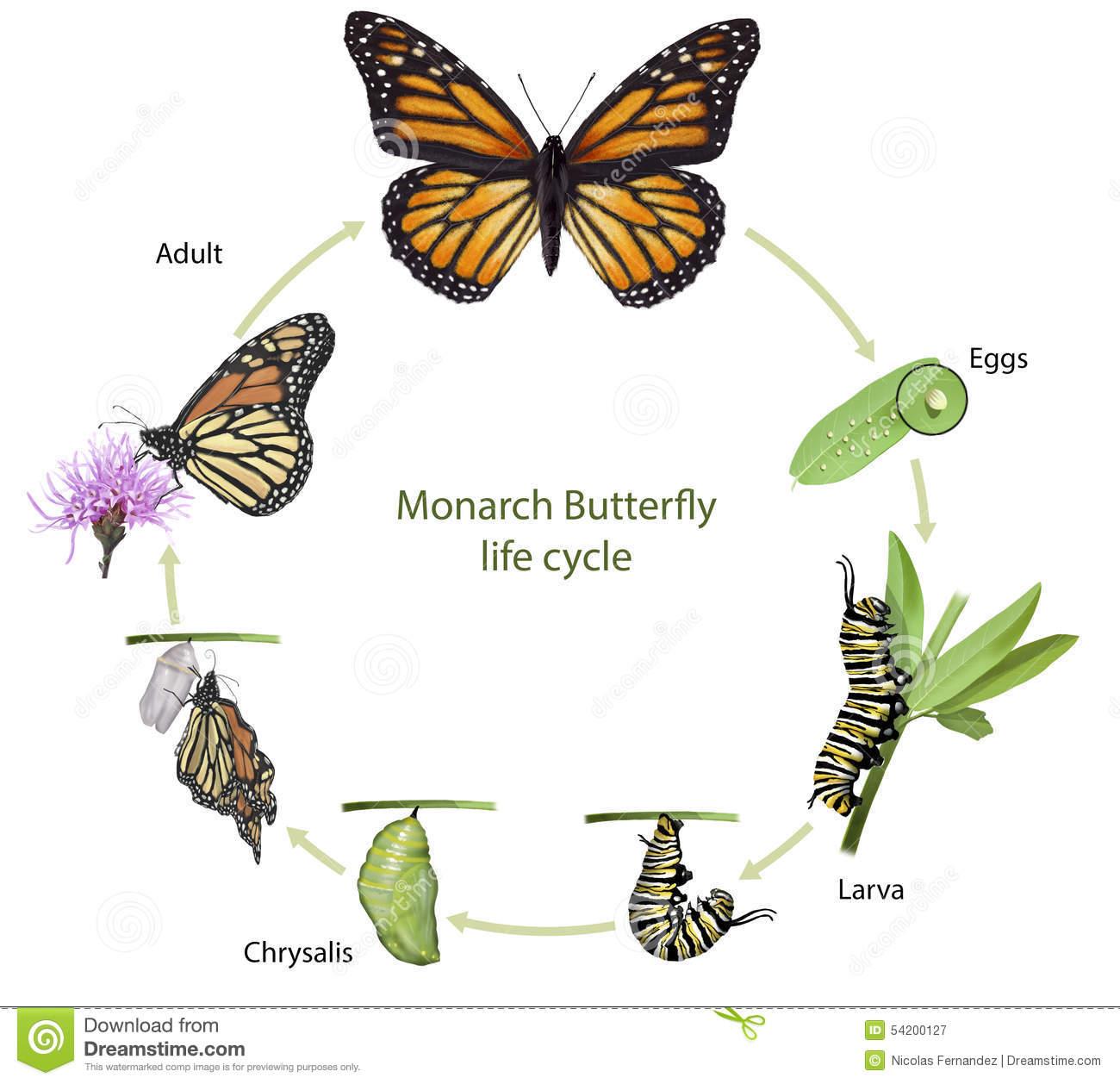 Hermosa Anatomía De La Mariposa Embellecimiento - Anatomía de Las ...