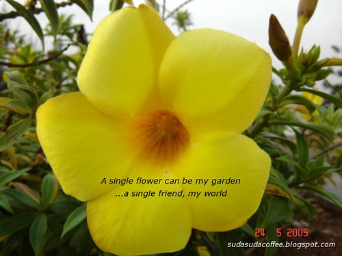 Sunflower Wallpaper With Quote Funny Pictures Gallery Flower Quotes Flowers Quotes