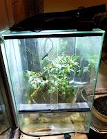 doświetlanie roślin