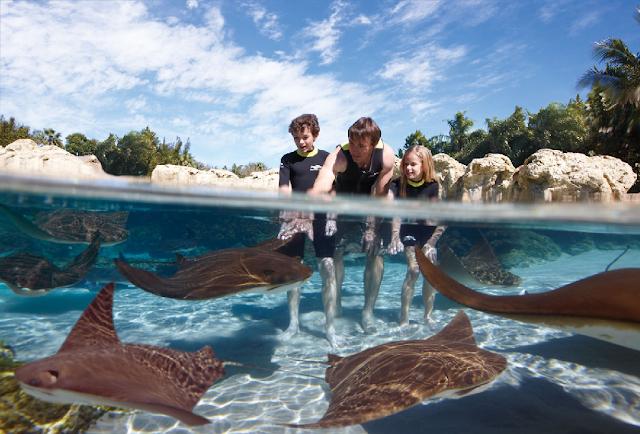 Discovery Cove em Orlando no mês de maio