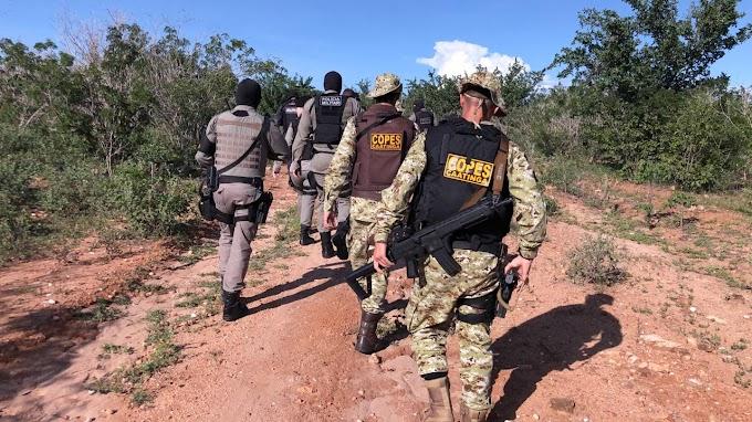 Operação das polícias civil e militar resulta na apreensão de dois mil pés de maconha em Mata Grande