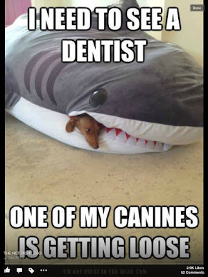 Funny Dog Humor : I need to see a dentist