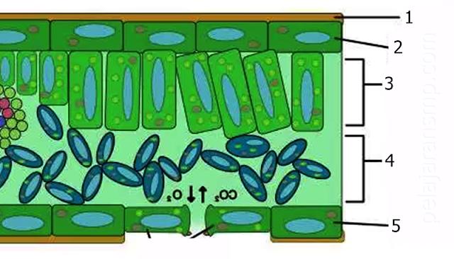 Ulangan Materi Sistem Kehidupan Tumbuhan Berserta Kunci Jawabannya