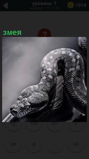 На поверхности стола ползет обычная небольшая змея