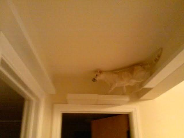 Cat Climbing Post And Skyway Ikea Hackers Ikea Hackers
