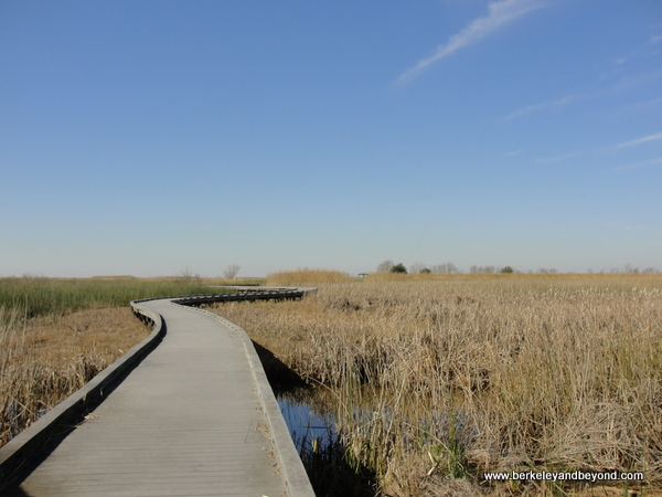 boardwalk at Sabine National Wildlife Refuge Wetland Walkway in Louisiana