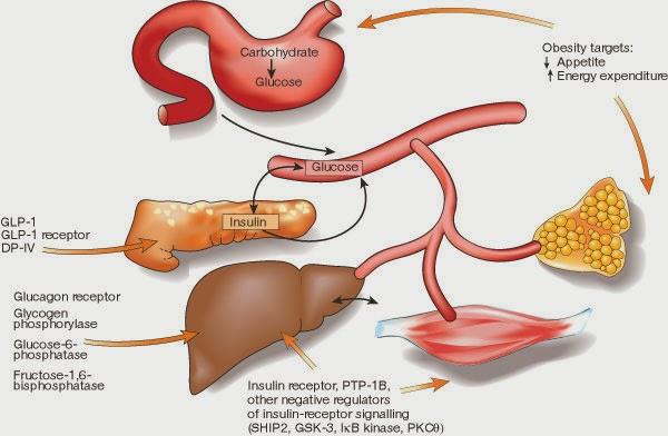 diabetes hipertónica vid