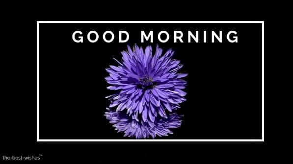 good morning image download with aster flower purple blossom