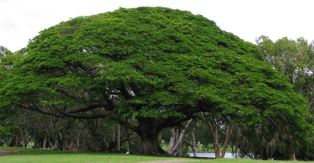 10 Fakta Tentang Pohon, Apakah Anda Sudah tahu?
