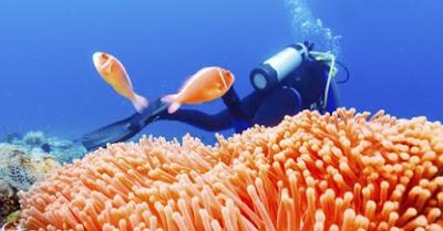 Animales y biologia marina