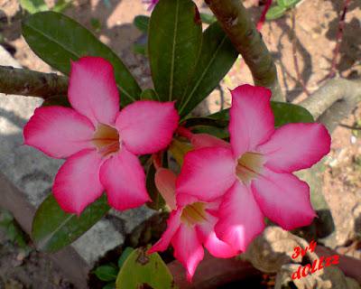 Penghias khas. Foto Bunga. Natural itu Cantik.