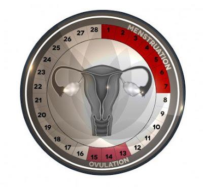 Est-ce que je peux savoir à quel jour fertile je tombe enceinte?