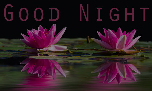 best goodnight text for her,good night wishes,good night,good night text for her quotes,romantic good night text for her,good night messages for girlfriend,really cute good night text messages for her,good night text messages to send someone you love,good night quotes for her,good night sms for her,good night wishes for her,cute good night status for her,good night love