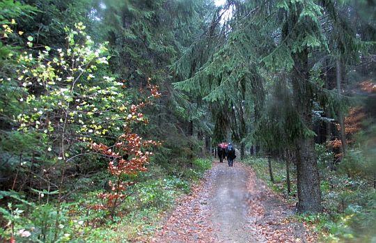 Leśna droga.