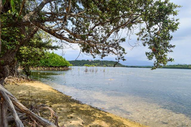 Mangroves in Zambales