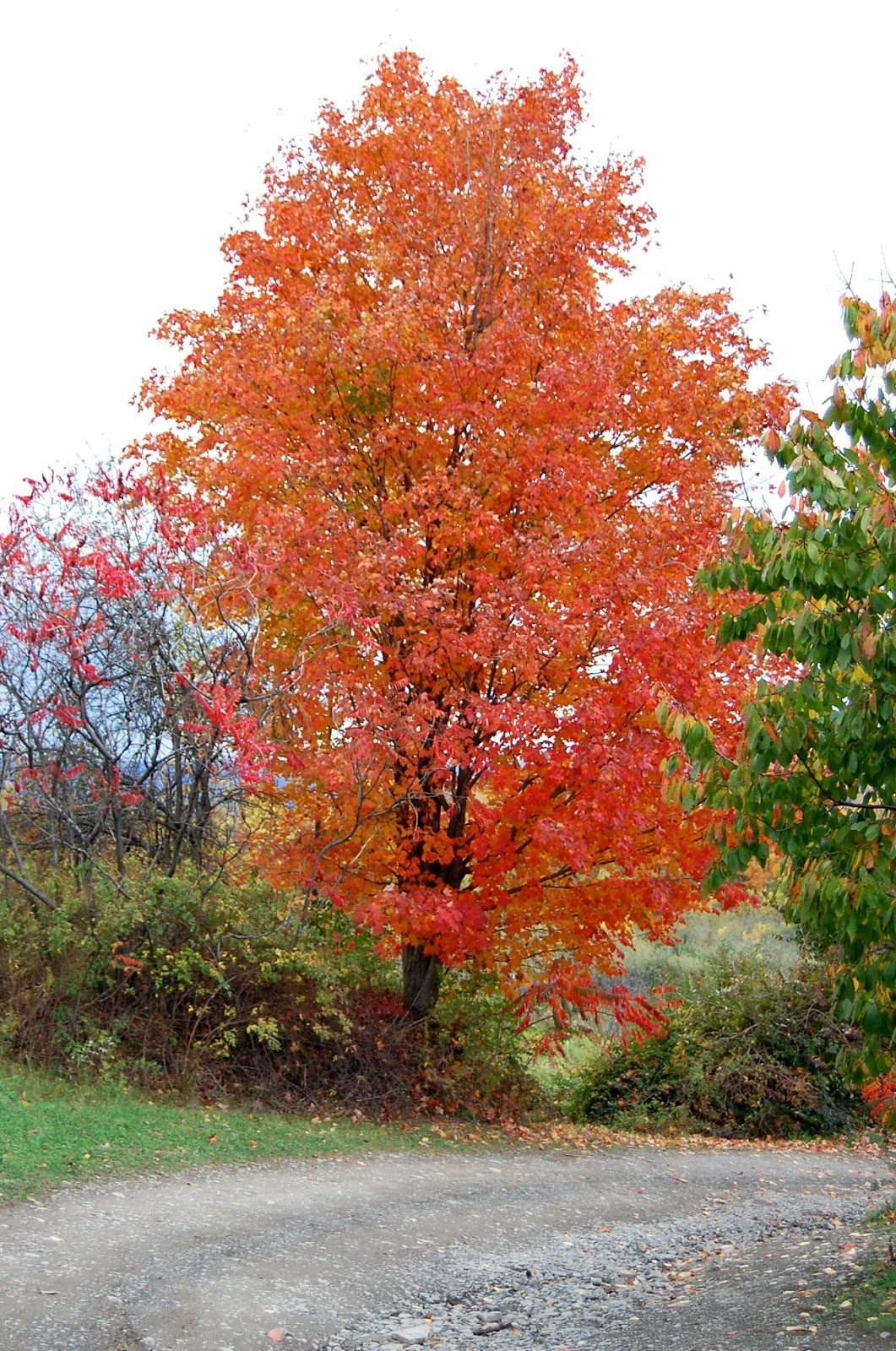 Weekend Getaway Seeking Fall Foliage At Watkins Glen