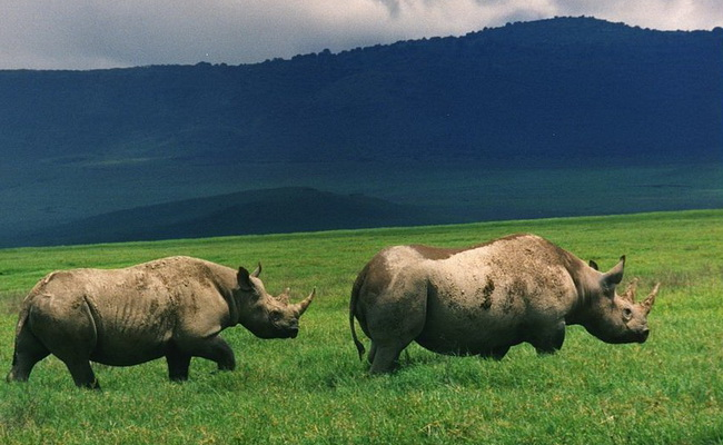 Xvlor.com Ngorongoro Conservation Area is beauty of crater highlands wildlife