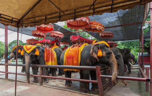 não ande em elefantes