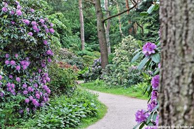 Hamburg Stadtpark Rhododendron Pfad