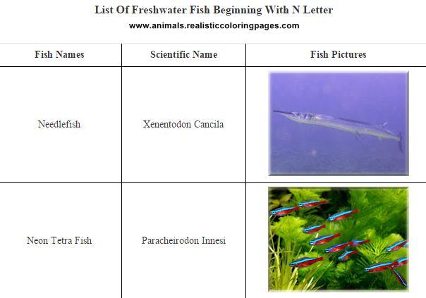 List of freshwater fish beginning with N