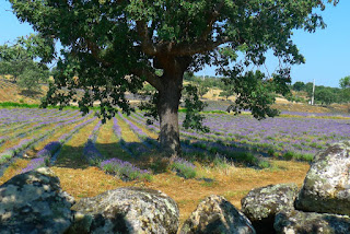 Nature, Fotografias de natureza, Castelo de Vide