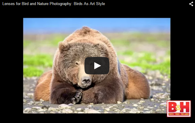 Lenses for Bird and Nature Photography: Birds As Art Style - YouTube Video
