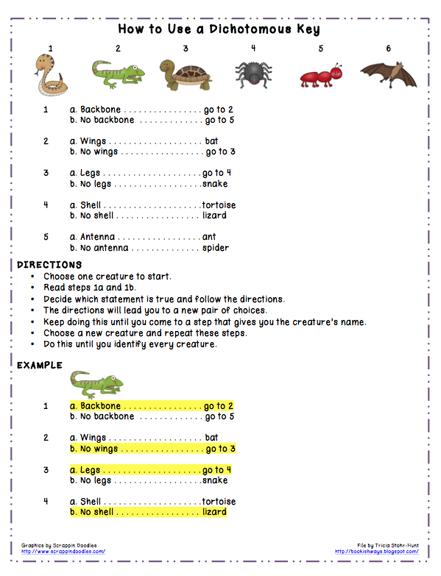 Simple Dichotomous Key Worksheet Free Worksheets Library ...