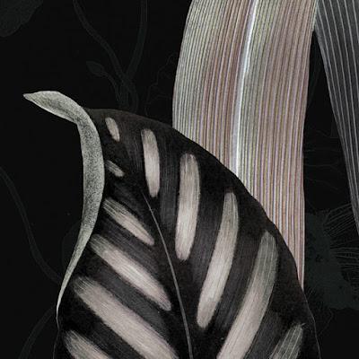 https://www.venusartprints.com.au/products/np602
