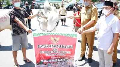 Gubernur Olly Serahkan 61 Ekor Sapi Kurban, Satu Diantaranya dari Presiden Jokowi