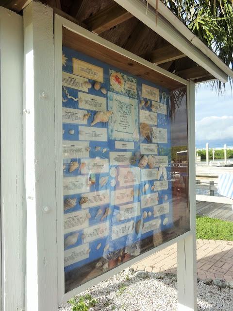 Muscheln in Caladesi Island State Park, Florida USA