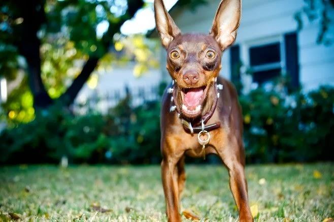 9cc67e9bf Surprised Dog is Surprised | BlueisKewl