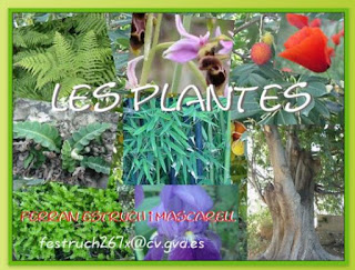 https://clic.xtec.cat/projects/plantes2/jclic.js/index.html