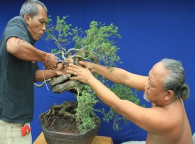 Pembentukan Tanaman Bonsai