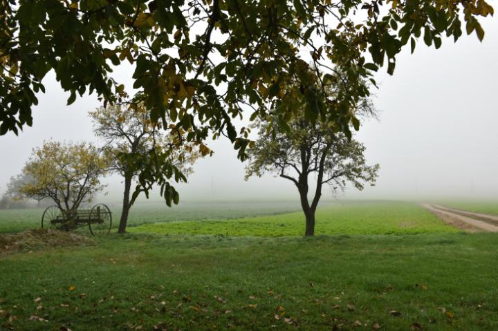 Blick über die FElder mit Nebel