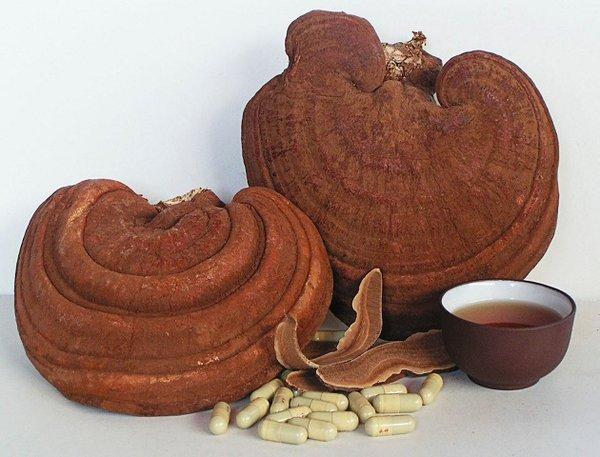 Nghiên cứu về tác dụng của nấm linh chi với sức khỏe