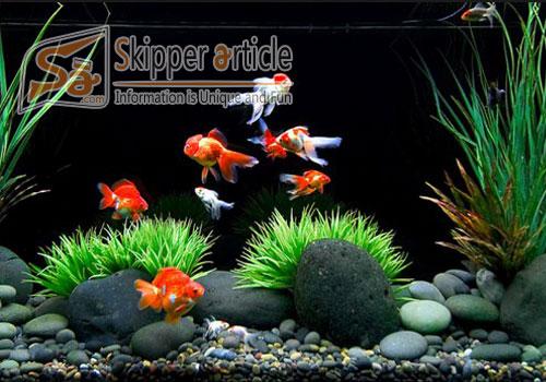 Caring for a Goldfish Aquarium