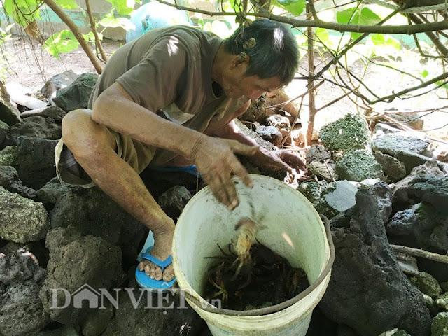 Người thân của anh Huệ đang bắt cua đá nuôi để bán