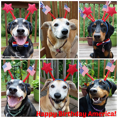 Three dogs celebrating America and 4th of July