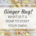 All About Ginger Bug