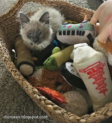 Fergus the kitten in a basket of toys