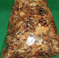 emas cotex, Ficus deltoidea