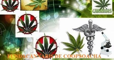 Resultado de imagen para CANNABIS DE COOPSOACHA
