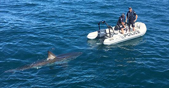 Grande Tubarão Branco persegue barco da polícia - Capa