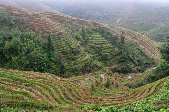 Rizières en terrasses près de Dazhai