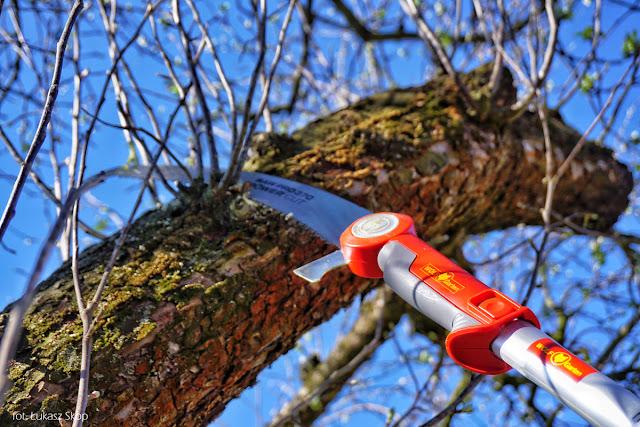 jak wyciąć gałęzie na wysokim drzewie