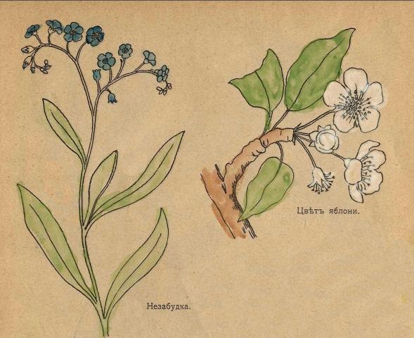 учимся рисовать цветок
