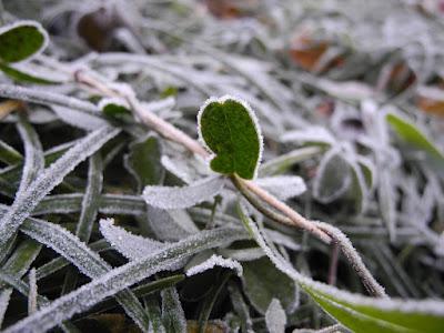 Προστασία φυτών από παγετό